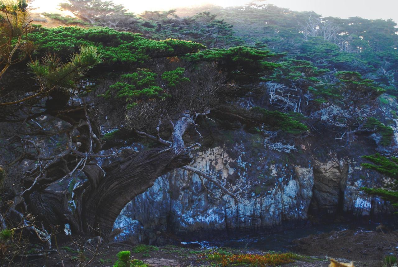 Misty Morning Point Lobos, CA