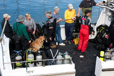 This group cheerfully prepared for a dive, with their official dive dog keeping an eye on them all.