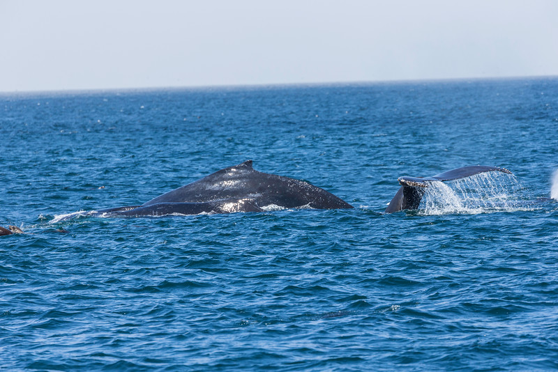 Monterey Whale Watching-8