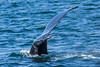 Monterey Whale Watching-7