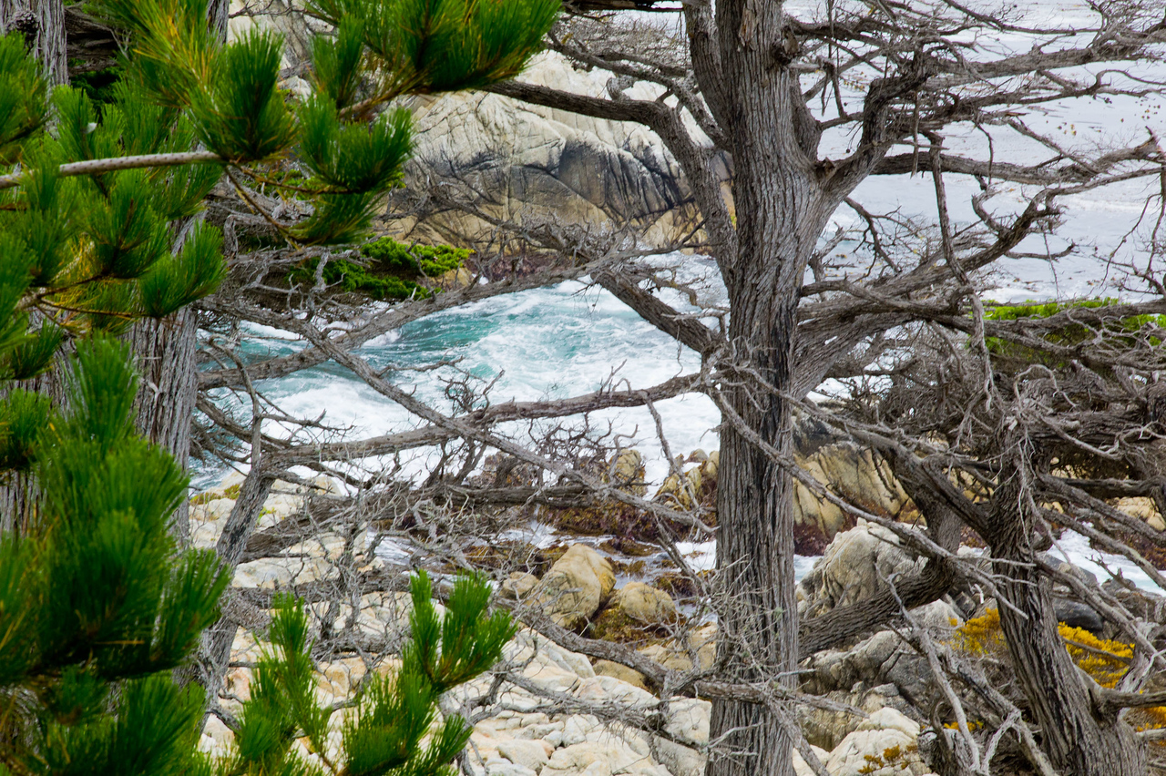 17 mile drive Pebble Beach to Carmel - A lovely ocean view through the trees.