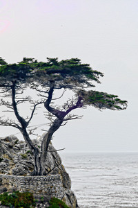 17 mile drive Pebble Beach to Carmel - world famous Cypress Trees