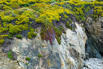 Big Sur Coast - The rock is highlighted by the bright green and yellow foliage.