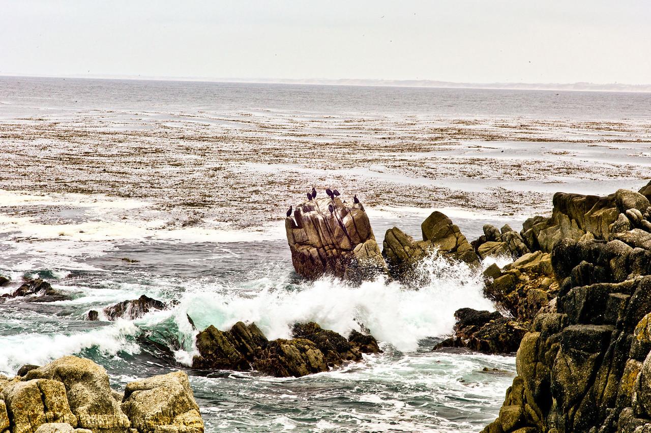 17 mile drive Pebble Beach to Carmel - Birds sitting on the rocks.