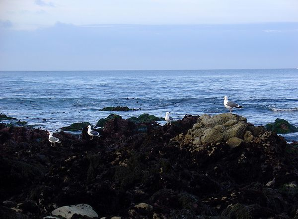a bunch of sea gulls posing for the camera