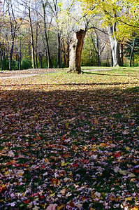 Parc Mont-Royal, le Central Park de Montréal.