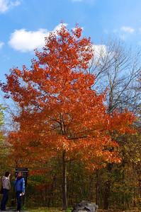 Aux couleurs de l'automne.