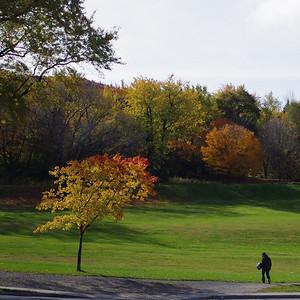 Mont-Royal et les couleurs de l'automne.