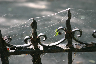 Ooh, cool--spider webby bits on spooky kind of wrought iron railings.