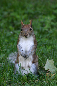 OK, sure, we have squirrels back home, but--with dogs--how often do I get to get this kind of shot?