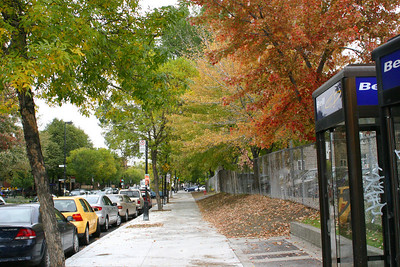 Almost autumn in montreal.
