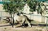 Wild horse in Shiprock