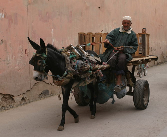 Donkey cart, in the medina