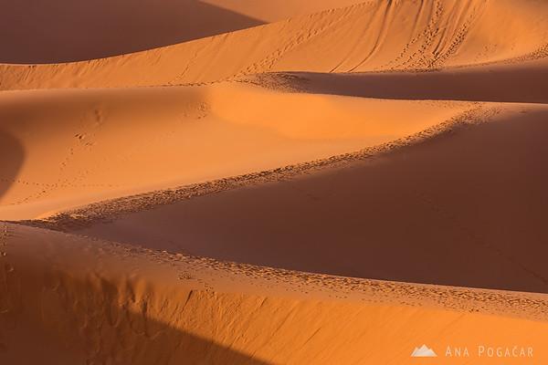 Erg Chebbi sand dunes of the Sahara