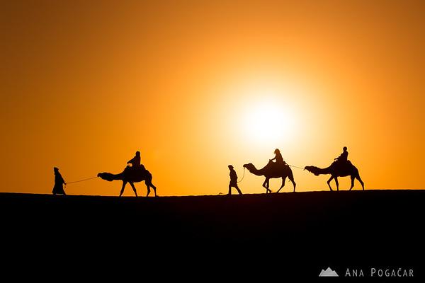 A caravan after sunrise - Erg Chebbi sand dunes of the Sahara