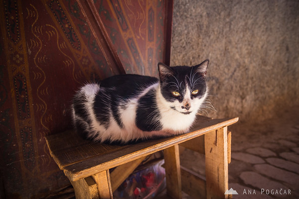 A kitty in one of the alleyways of Fes