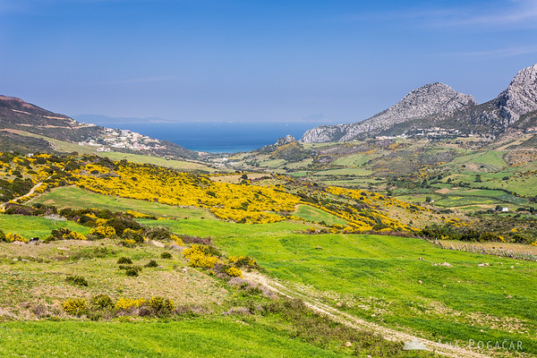 Yellow and green fields at the Mediterranean coast near Tangier