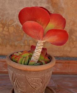Flora - mostly Cactii