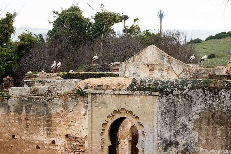 Sala Colonia (Roman ruins)