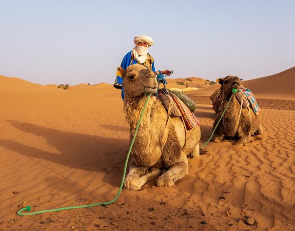 Camels in the Saharah Desert, Morocco