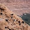 Goats-Ziz River Gorge