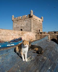 Essaouira Post Trip