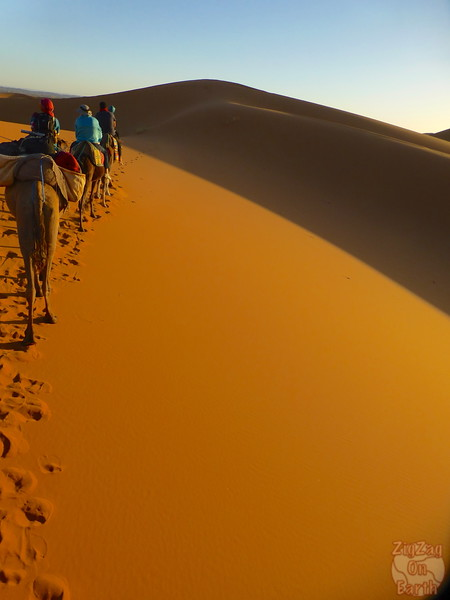 camel ride in the Sahara Morocco 3