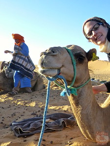 Camel friend 2