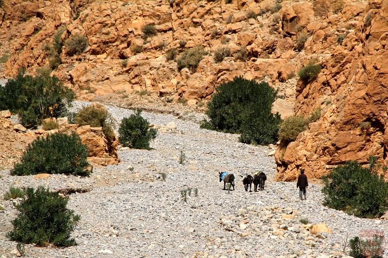 Dades Gorge - Morocco  2