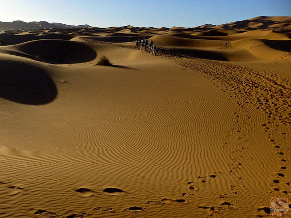 camel ride in the Sahara Morocco 5