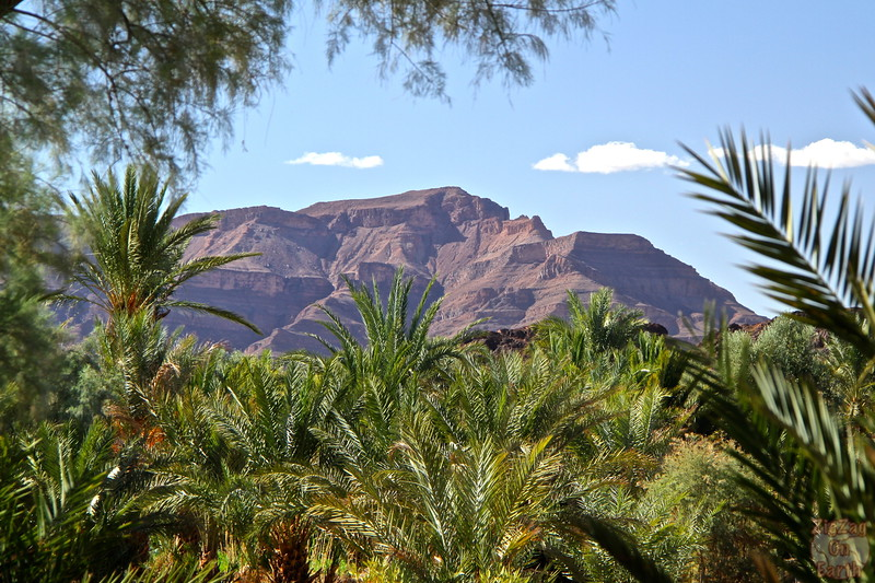 Draa valley palm trees and purple mountains, Morocco