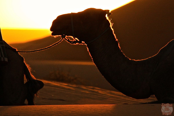 Sunrise with Berbers in the Sahara Morocco 2