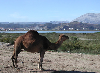 2003 Morocco ~ Tetuan & Tangier