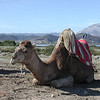 Near Ceuta, a tourist trap camel ride option