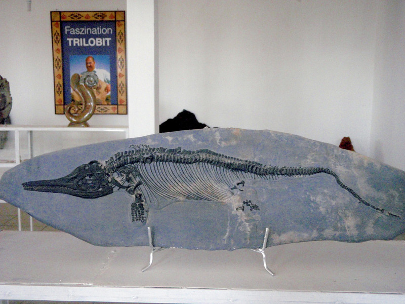 Marine dinosaur, about 6 ft long