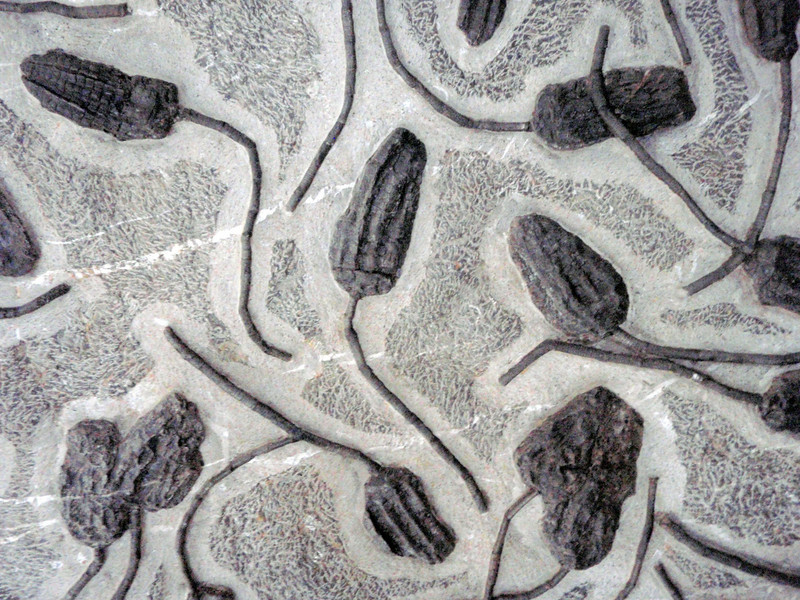 Animals looking like flowers embedded in stone