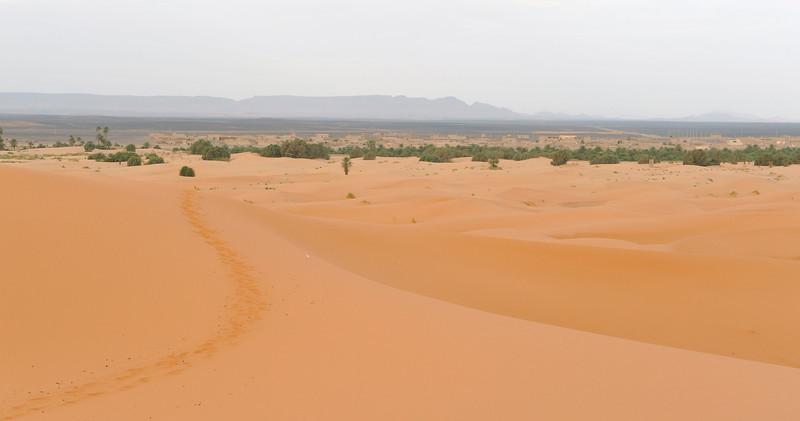 Looking west from one of the higher dunes towards D'jorbel S'horra (Sahara Mountain)