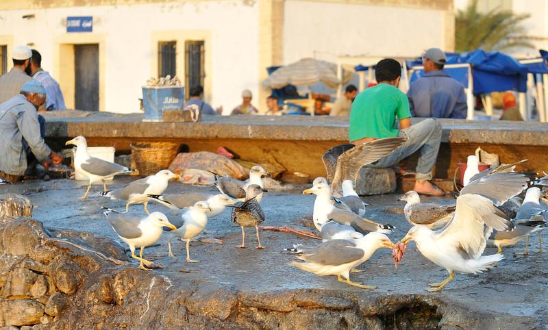 Seagulls arguing over fishermen's scraps