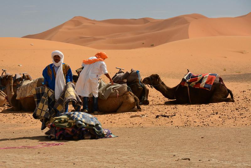 Our Dromedaries, Sahara Desert, Morocco