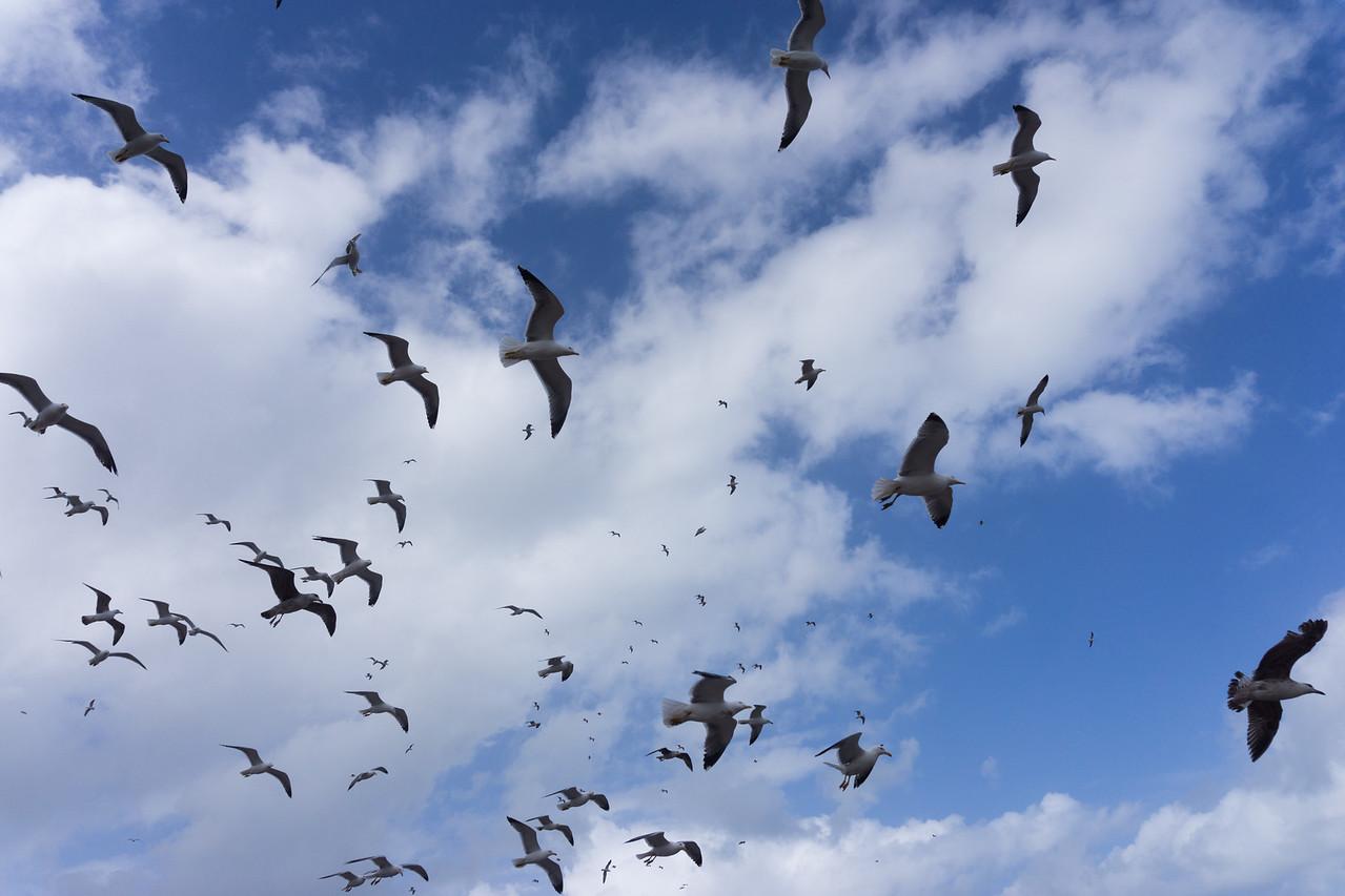 so many gulls