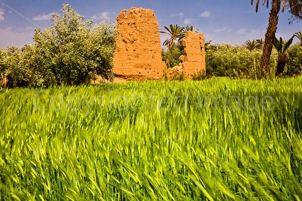 In the oasis of Skoura