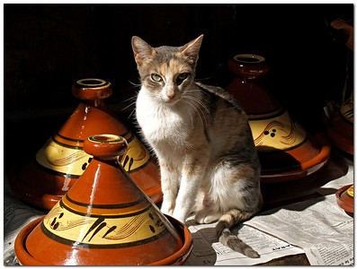 Tajin Cat,  Cat sitting Between Tajin pots  In the Markets inside the old city of Fes Morocco.