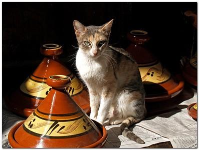 Tajin Cat,  Cat sitting Between Tajin pots  In the Markets inside the old city of Fes Morocco.