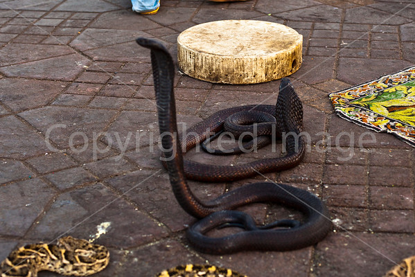 Cobras in the square