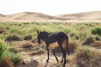 Desert Trip Near Zagora