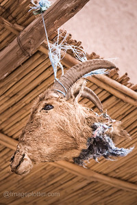 Goat's Head, Ouarzazate