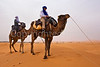On our camels