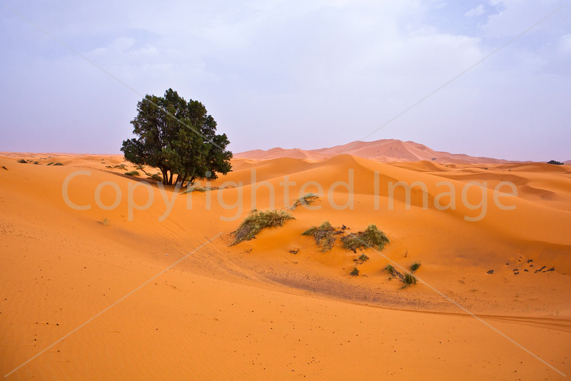 A tree in the dunes