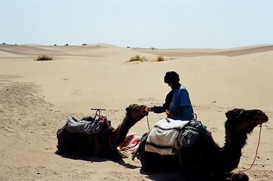 Camel Ride Near Zagora