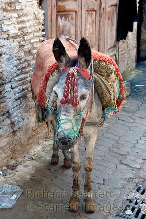 Mercedes donkey.